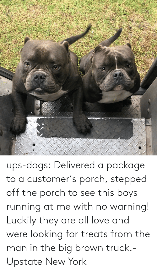 the man: ups-dogs:  Delivered a package to a customer's porch, stepped off the porch to see this boys running at me with no warning! Luckily they are all love and were looking for treats from the man in the big brown truck.- Upstate New York