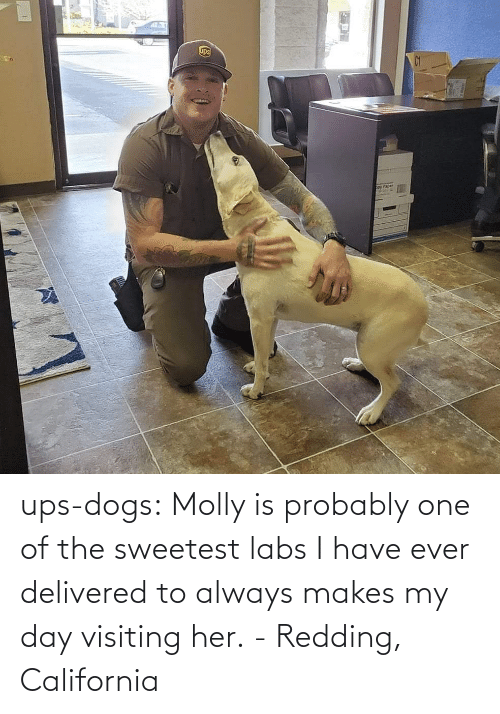 probably: ups-dogs:  Molly is probably one of the sweetest labs I have ever delivered to always makes my day visiting her. - Redding, California