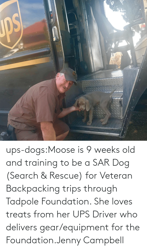 Equipment: ups-dogs:Moose is 9 weeks old and training to be a SAR Dog (Search & Rescue) for Veteran Backpacking trips through Tadpole Foundation. She loves treats from her UPS Driver who delivers gear/equipment for the Foundation.Jenny Campbell