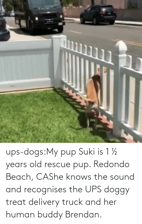 she: ups-dogs:My pup Suki is 1 ½ years old rescue pup. Redondo Beach, CAShe knows the sound and recognises the UPS doggy treat delivery truck and her human buddy Brendan.