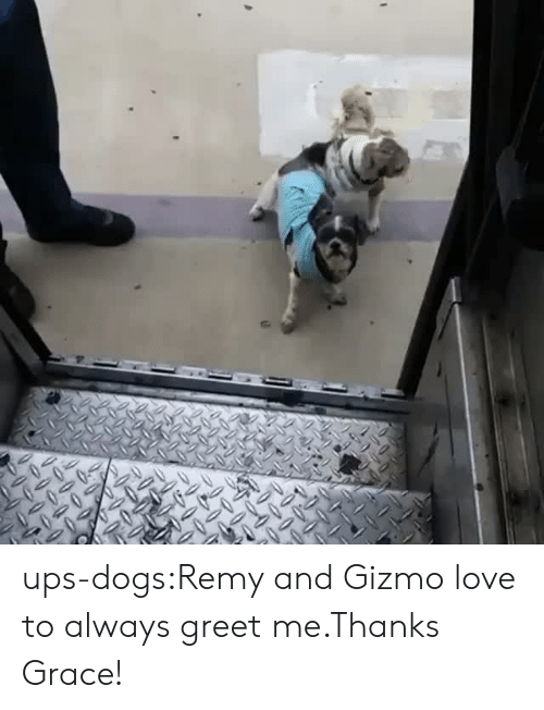 Remy: ups-dogs:Remy and Gizmo love to always greet me.Thanks Grace!