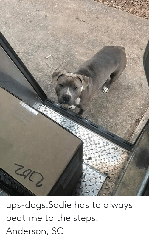beat: ups-dogs:Sadie has to always beat me to the steps. Anderson, SC