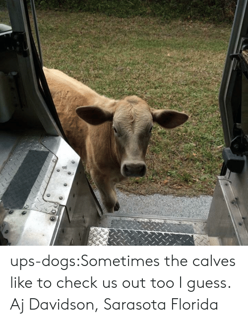 davidson: ups-dogs:Sometimes the calves like to check us out too I guess. Aj Davidson, Sarasota Florida
