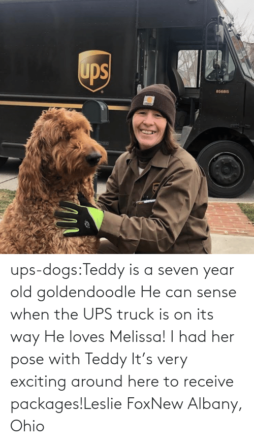 pose: ups-dogs:Teddy is a seven year old goldendoodle He can sense when the UPS truck is on its way He loves Melissa! I had her pose with Teddy It's very exciting around here to receive packages!Leslie FoxNew Albany, Ohio