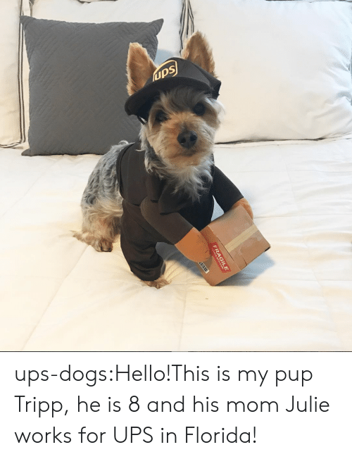 Dogs, Hello, and Target: ups ups-dogs:Hello!This is my pup Tripp, he is 8 and his mom Julie works for UPS in Florida!