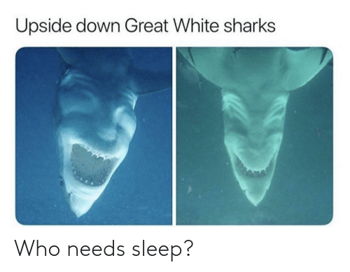 Needs: Upside down Great White sharks Who needs sleep?
