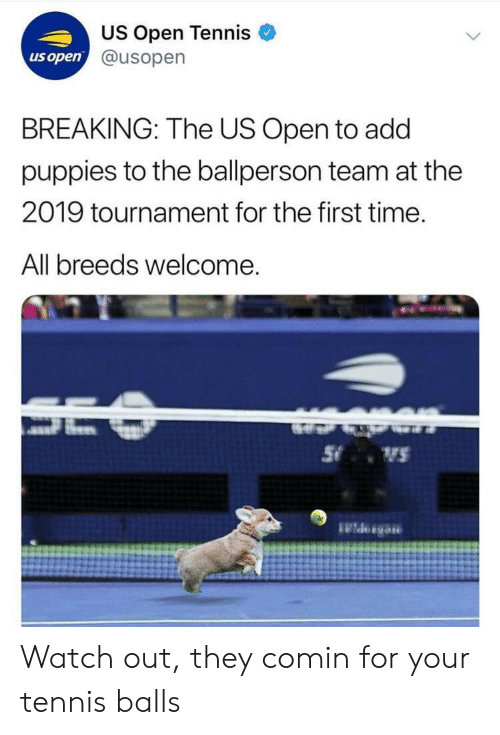 Tournament: US Open Tennis  @usopern  us open  BREAKING: The US Open to add  puppies to the ballperson team at the  2019 tournament for the first time.  All breeds welcome Watch out, they comin for your tennis balls