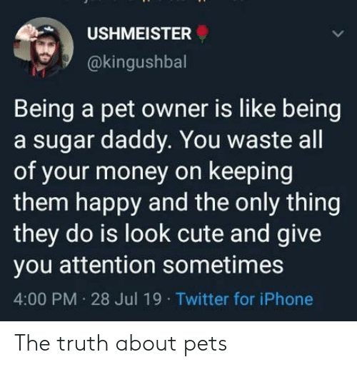 Cute, Iphone, and Money: USHMEISTER  @kingushbal  Being a pet owner is like being  a sugar daddy. You waste all  of your money on keeping  them happy and the only thing  they do is look cute and give  you attention sometimes  4:00 PM 28 Jul 19 Twitter for iPhone The truth about pets