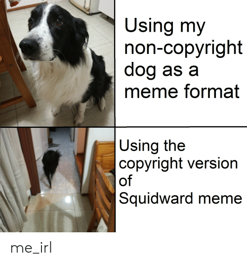 Meme, Squidward, and Irl: Using my  non-copyright  dog as a  meme format  Using the  copyright version  of  Squidward meme me_irl