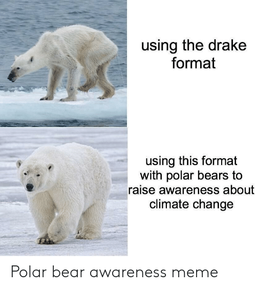 polar bears: using the drake  format  using this format  with polar bears to  raise awareness about  climate change Polar bear awareness meme