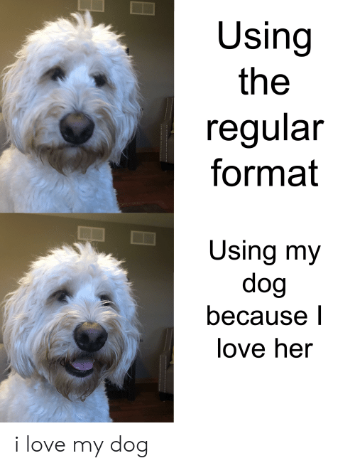 Love, Her, and Dog: Using  the  regular  format  Using my  dog  because l  love her  *  *** i love my dog