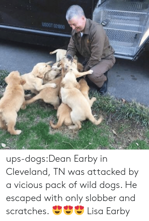 Vicious: USOOT 021800 ups-dogs:Dean Earby in Cleveland, TN was attacked by a vicious pack of wild dogs. He escaped with only slobber and scratches. 😍😍😍 Lisa Earby