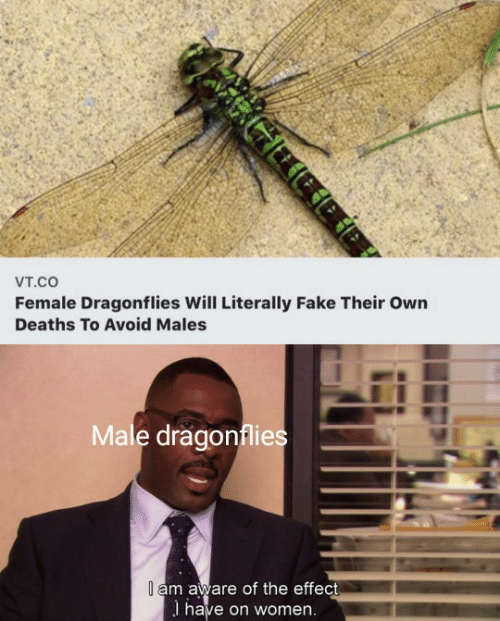 Avoid: Vт.cO  Female Dragonflies Will Literally Fake Their Own  Deaths To Avoid Males  Male dragonflies  I am aware of the effect  I have on women.