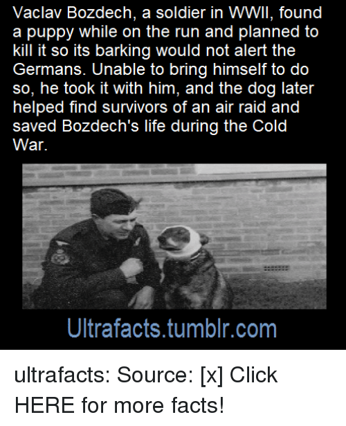 Click, Facts, and Life: Vaclav Bozdech, a soldier in WWII, found  a puppy while on the run and planned to  kill it so its barking would not alert the  Germans. Unable to bring himself to do  so, he took it with him, and the dog later  helped find survivors of an air raid and  saved Bozdech's life during the Cold  War.  Ultrafacts.tumblr.com ultrafacts: Source: [x] Click HERE for more facts!