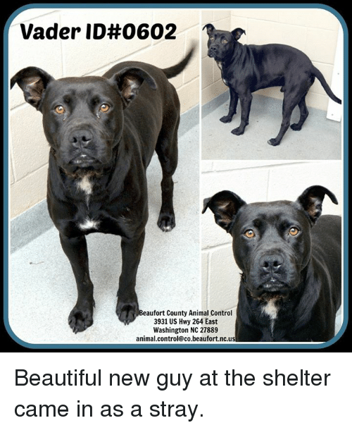 beaufort county animal control