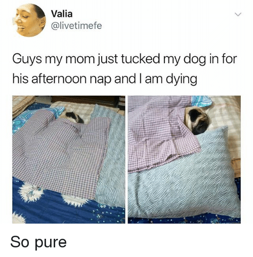 Memes, Mom, and 🤖: Valia  @livetimefe  Guys my mom just tucked my dog in for  his afternoon nap and I am dying So pure