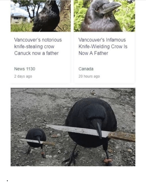 Infamous: Vancouver's notorious  Vancouver's Infamous  knife-stealing crow  Knife-Wielding Crow Is  Canuck now a father  Now A Father  Canada  News 1130  2 days ago  20 hours ago .