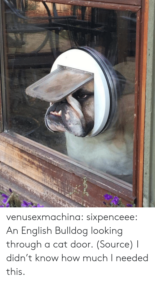 Reddit, Tumblr, and Blog: venusexmachina:  sixpenceee:  An English Bulldog looking through a cat door. (Source)  I didn't know how much I needed this.