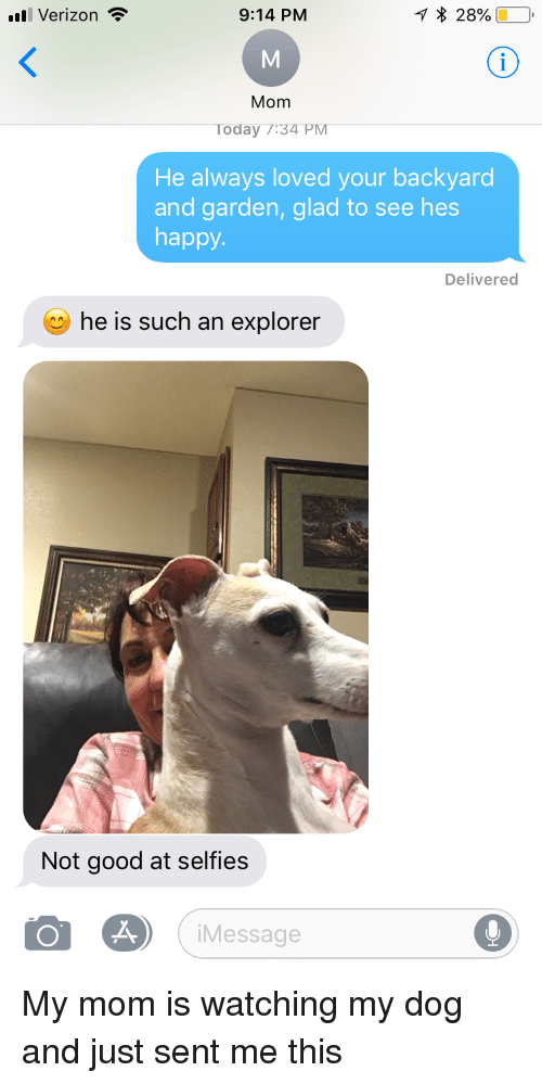Verizon, Good, and Happy: Verizon  9:14 PM  * 28%)  Mom  Today T:34 PM  He always loved your backyard  and garden, glad to see hes  happy  Delivered  he is such an explorer  Not good at selfies  Message My mom is watching my dog and just sent me this