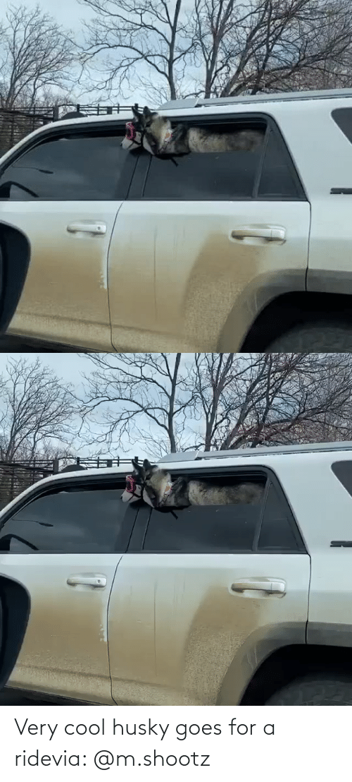 ride: Very cool husky goes for a ridevia: @m.shootz