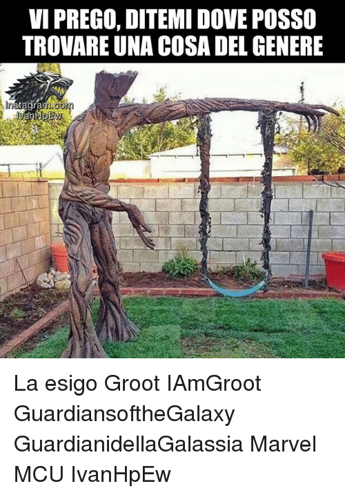 Dove, Memes, and Marvel: VI PREGO, DITEMI DOVE POSSO  TROVARE UNA COSA DEL GENERE  Gom  tagra La esigo Groot IAmGroot GuardiansoftheGalaxy GuardianidellaGalassia Marvel MCU IvanHpEw
