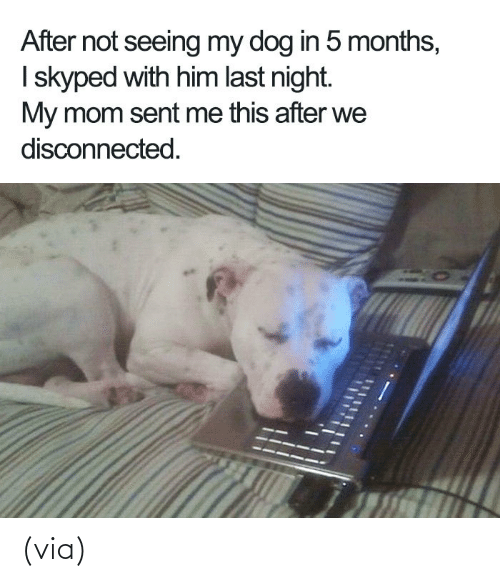 Wholesomememes: (via)