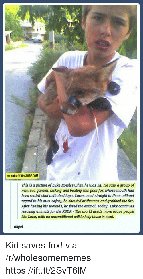 The Fox: VIA THEMETAPICTURE.COM  This is a picture of Luke Rowles when he was 15. He saw a group of  men in a garden, kicking and beating this poor fox whose mouth had  been sealed shut with duct tape. Lucas went straight to them without  regard to his own safety, he shouted at the men and grabbed the fox.  After healing his woumds, he freed the animal. Today, Luke continues  rescuing animals for the RSDR - The world needs more brave people  ike Luke, with an unconditional will to hep those in need.  angel Kid saves fox! via /r/wholesomememes https://ift.tt/2SvT6lM