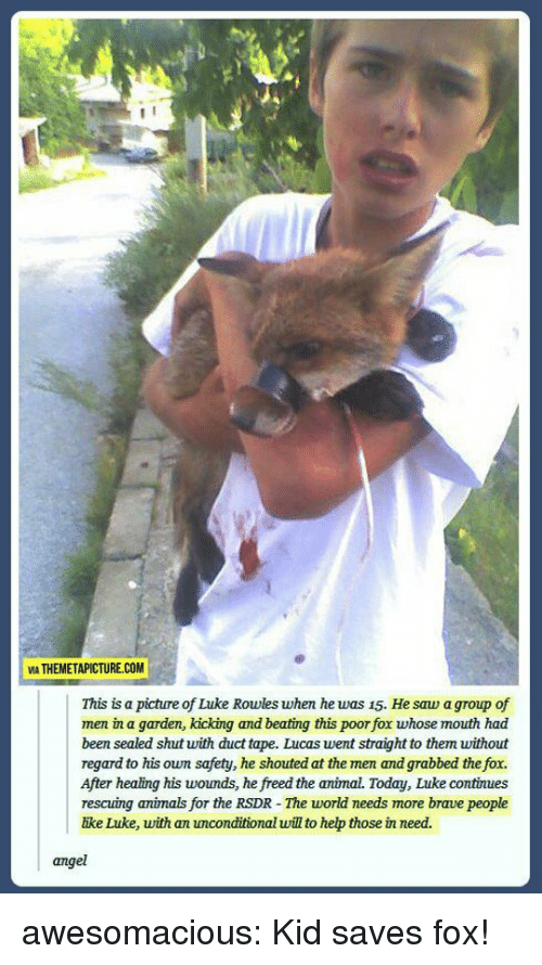 The Fox: VIA THEMETAPICTURE.COM  This is a picture of Luke Rowles when he was 15. He saw a group of  men in a garden, kicking and beating this poor fox whose mouth had  been sealed shut with duct tape. Lucas went straight to them without  regard to his own safety, he shouted at the men and grabbed the fox.  After healing his woumds, he freed the animal. Today, Luke continues  rescuing animals for the RSDR - The world needs more brave people  ike Luke, with an unconditional will to hep those in need.  angel awesomacious:  Kid saves fox!