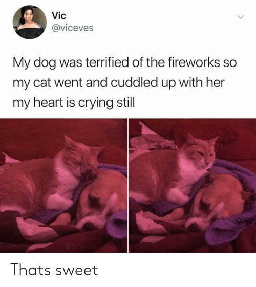 Fireworks: Vic  @viceves  My dog was terrified of the fireworks so  my cat went and cuddled up with her  my heart is crying still Thats sweet