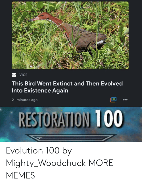 vice: VICE  This Bird Went Extinct and Then Evolved  Into Existence Again  21 minutes ago  RESTORATION 100 Evolution 100 by Mighty_Woodchuck MORE MEMES