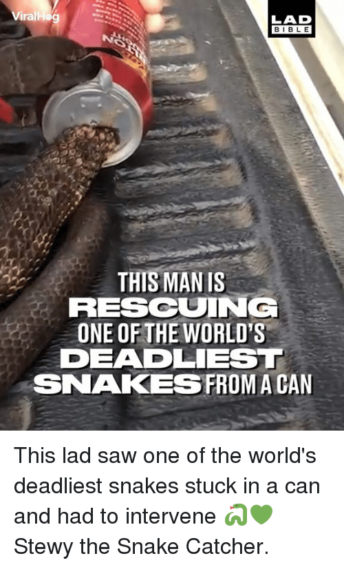 Dank, Saw, and Snake: Viral  LAD  BIBL E  THIS MAN IS  RESCUING  ONE OF THE WORLD'S  DEADLIEST  SNAKESFROM A CAN This lad saw one of the world's deadliest snakes stuck in a can and had to intervene 🐍💚  Stewy the Snake Catcher.
