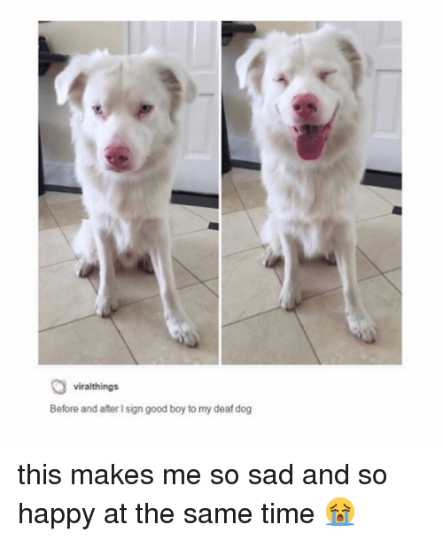 Memes, Good, and Happy: viralthings  Before and after I sign good boy to my deaf dog this makes me so sad and so happy at the same time 😭