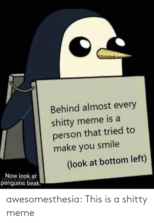 shitty: Voure gay  Behind almost every  shitty meme is a  person that tried to  make you smile  (look at bottom left)  Now look at  Have  penguins beak. awesomesthesia:  This is a shitty meme