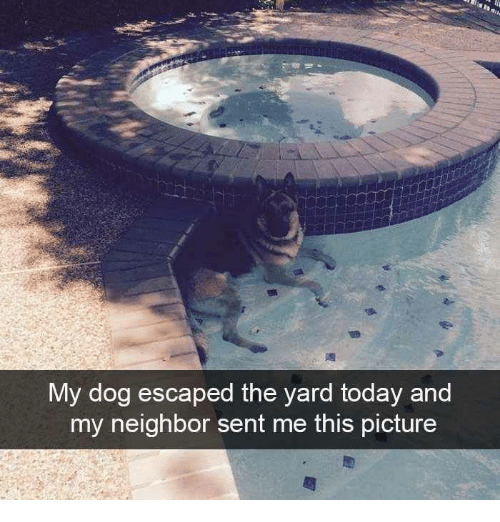 the yards: Vy dog escaped the yard today and  my neighbor sent me this picture