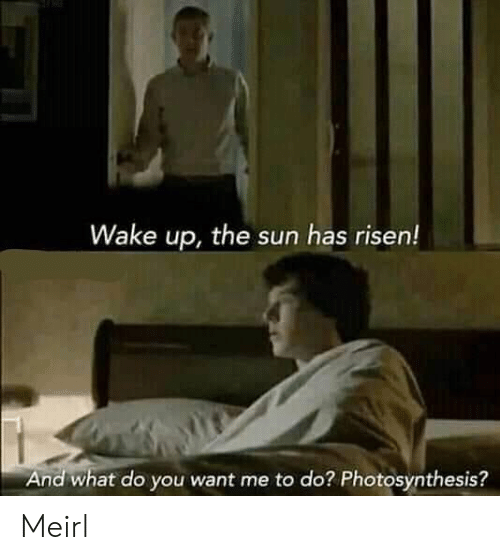 Photosynthesis, MeIRL, and Sun: Wake up, the sun has risen!  And what do you want me to do? Photosynthesis? Meirl