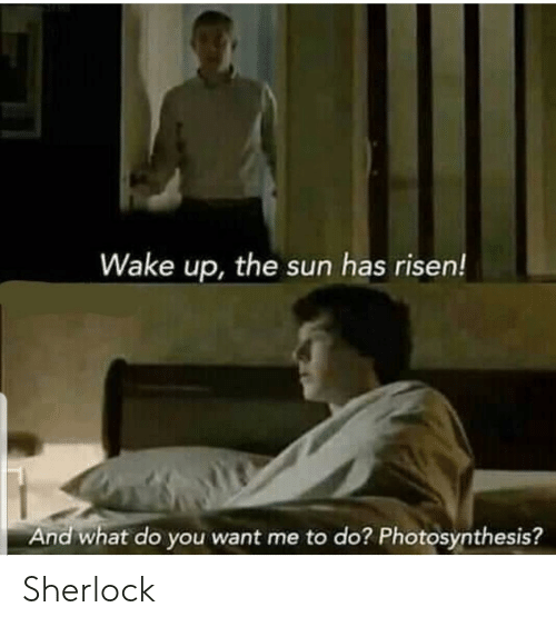 Photosynthesis, Sherlock, and Terrible Facebook: Wake up, the sun has risen!  And what do you want me to do? Photosynthesis? Sherlock