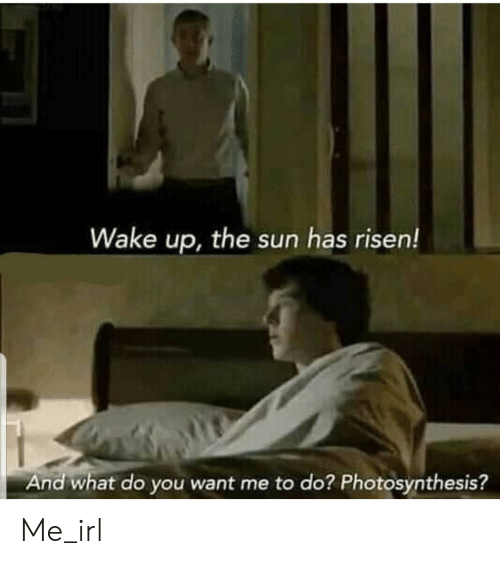 Photosynthesis, Irl, and Me IRL: Wake up, the sun has risen!  And what do you want me to do? Photosynthesis? Me_irl