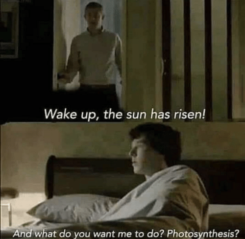 Photosynthesis, Sun, and The Sun: Wake up, the sun has risen!  And what do you want me to do? Photosynthesis?