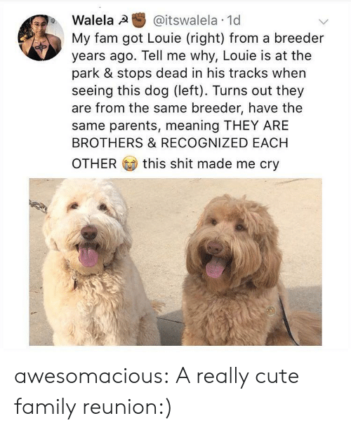 Cute, Fam, and Family: Walela @itswalela 1d  My fam got Louie (right) from a breeder  years ago. Tell me why, Louie is at the  park & stops dead in his tracks when  seeing this dog (left). Turns out they  are from the same breeder, have the  same parents, meaning THEY ARE  BROTHERS & RECOGNIZED EACH  OTHER this shit made me cry awesomacious:  A really cute family reunion:)