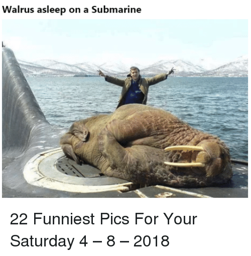 Submarine, Walrus, and Pics: Walrus asleep on a Submarine 22 Funniest Pics For Your Saturday 4 – 8 – 2018