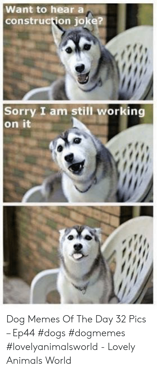 Animals, Dogs, and Memes: Want to hear a  construction joke?  Sorry I am still working  on it Dog Memes Of The Day 32 Pics – Ep44 #dogs #dogmemes #lovelyanimalsworld - Lovely Animals World
