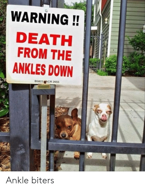 ankles: WARNING!!  DEATH  FROM THE  ANKLES DOWN  85822 ACR 2655 Ankle biters