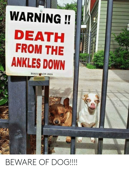 ankles: WARNING!!  DEATH  FROM THE  ANKLES DOWN  B5822 ACR 2655 BEWARE OF DOG!!!!