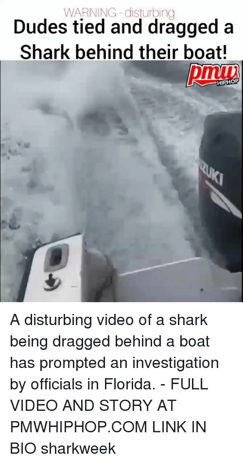 Sharked: WARNING -disturbing  Dudes tied and dragged a  Shark behind their boat!  pmiv  HIPHOP A disturbing video of a shark being dragged behind a boat has prompted an investigation by officials in Florida. - FULL VIDEO AND STORY AT PMWHIPHOP.COM LINK IN BIO sharkweek