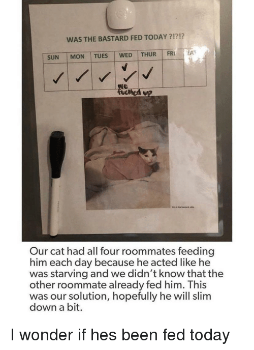 Roommate, Today, and Wonder: WAS THE BASTARD FED TODAY ?1?!?  SUN   MON   TUES WED   THUR I FRİ  Our cat had all four roommates feeding  him each day because he acted like he  was starving and we didn't know that the  other roommate already fed him. This  was our solution, hopefully he will slim  down a bit. I wonder if hes been fed today