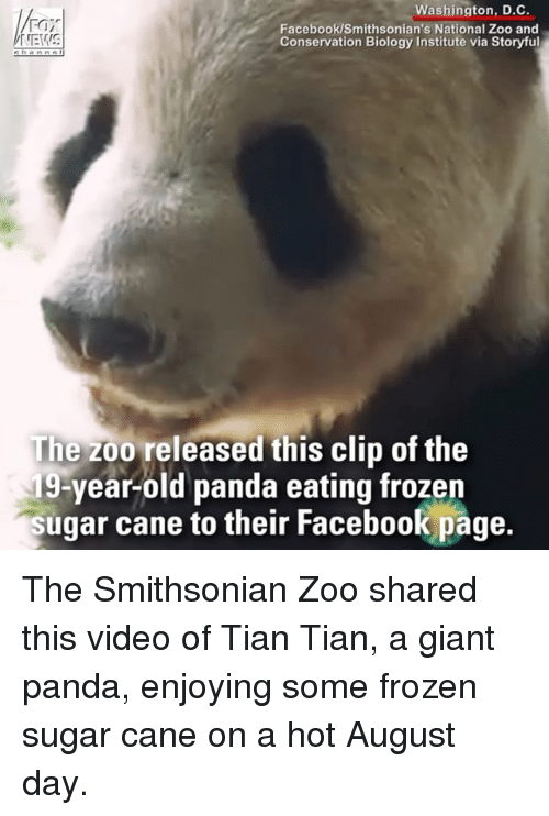 canes: Washington, D.C.  Facebook/Smithsonian's National Zoo and  Conservation Biology Institute via Storyful  The zoo released this clip of the  19-year-old panda eating frozen  sugar cane to their Facebook page.  their Facebook page The Smithsonian Zoo shared this video of Tian Tian, a giant panda, enjoying some frozen sugar cane on a hot August day.