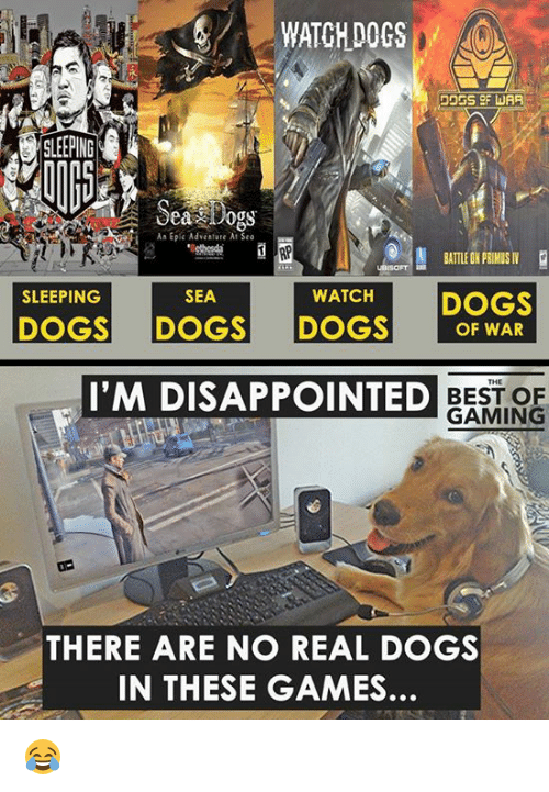 Watching Dogs