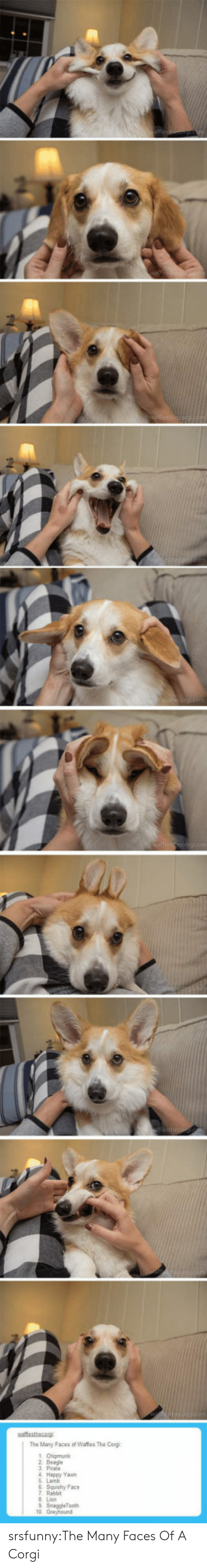 Corgi, Tumblr, and Blog: wattesthacorg srsfunny:The Many Faces Of A Corgi