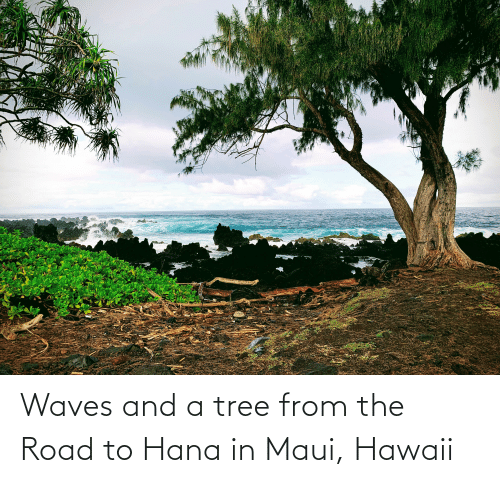 Waves, Hawaii, and Maui: Waves and a tree from the Road to Hana in Maui, Hawaii