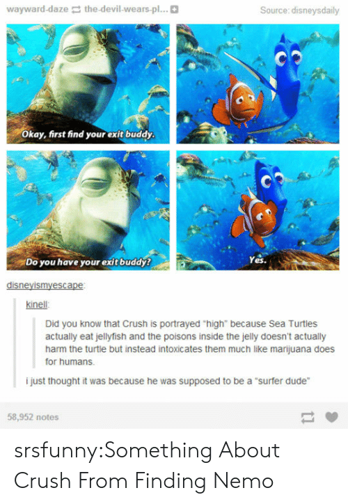"""Finding Nemo: wayward-daze the-devil-wears-pl...  Source: disneysdaily  Okay, first find your exit buddy  Do you have your exit buddy?  Yes.  disneyismyescape  kinell  Did you know that Crush is portrayed """"high"""" because Sea Turtles  actually eat jellyfish and the poisons inside the jelly doesn't actually  harm the turtle but instead intoxicates them much like marijuana does  for humans.  i just thought it was because he was supposed to be a """"surfer dude""""  58,952 notes srsfunny:Something About Crush From Finding Nemo"""